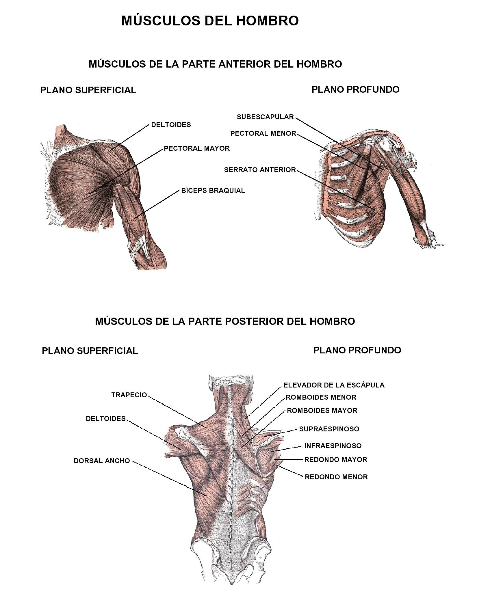 Pérdida o deficiencia de rotación interna de la articulación del ...