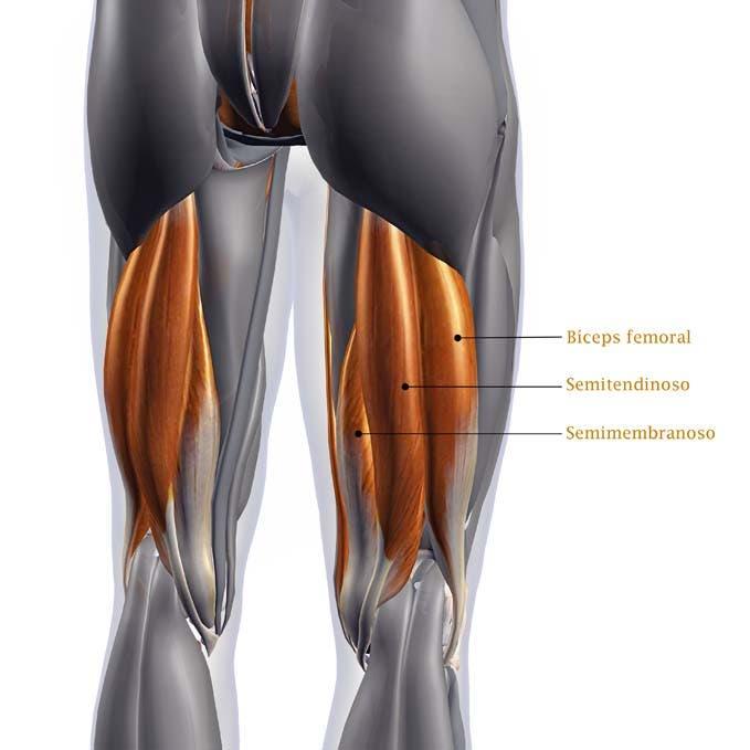 acortamiento de los músculos isquiotibiales