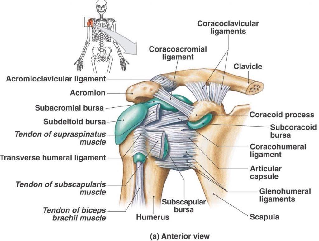 bursas del hombro