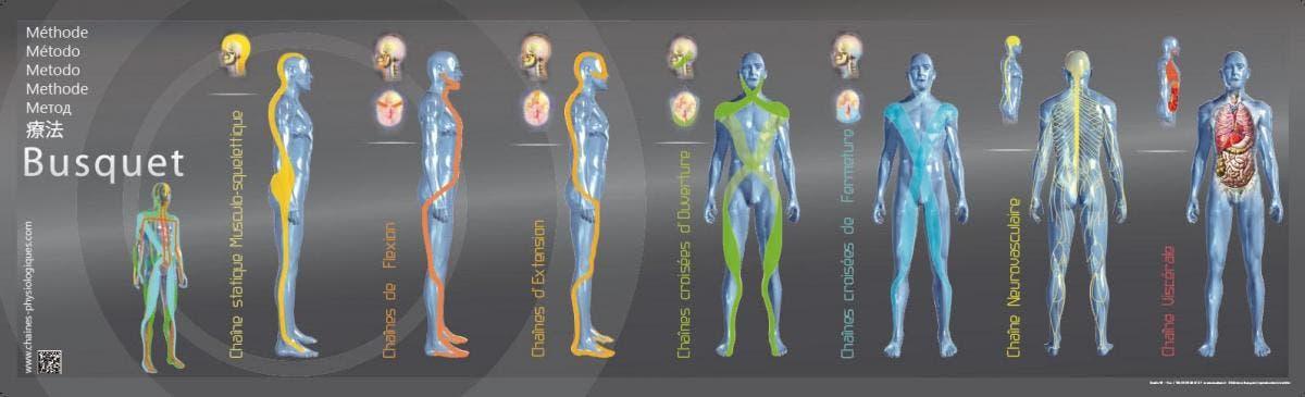 Cadenas Musculares Método Busquet