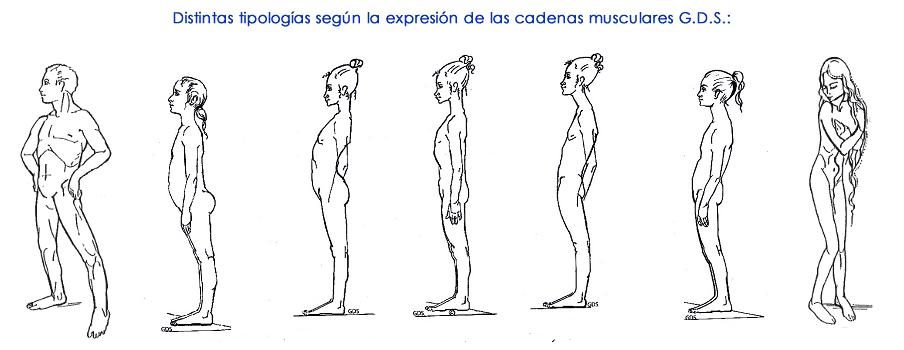 Cadenas Musculares y Articulares Método GDS (Godelieve Denys-Struyf)