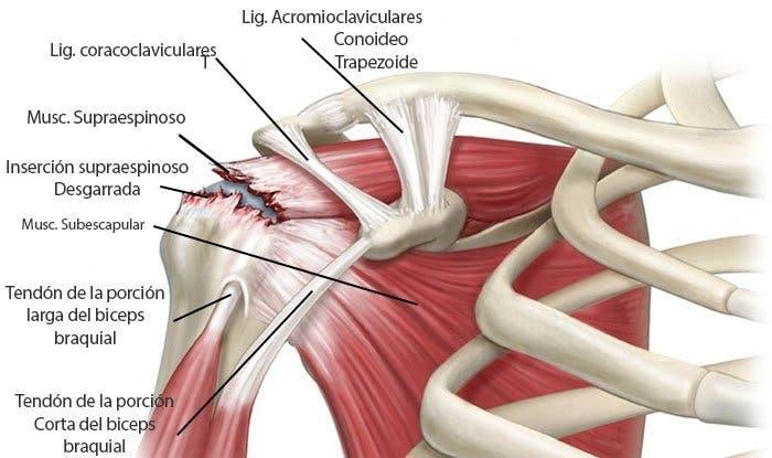 Después de la gripe el dolor en la espalda y los músculos