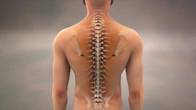 ejercicios de fortalecimiento para la espalda, prevenir y solucionar dolores