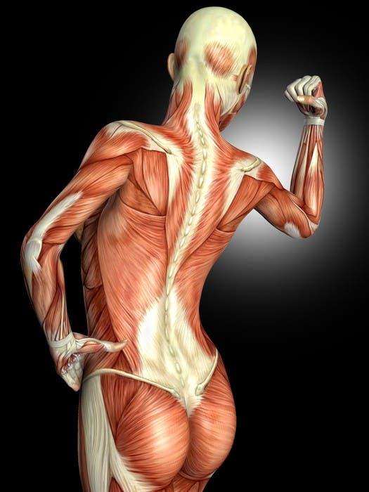 Errores que no debes cometer al hacer ejercicios para la espalda