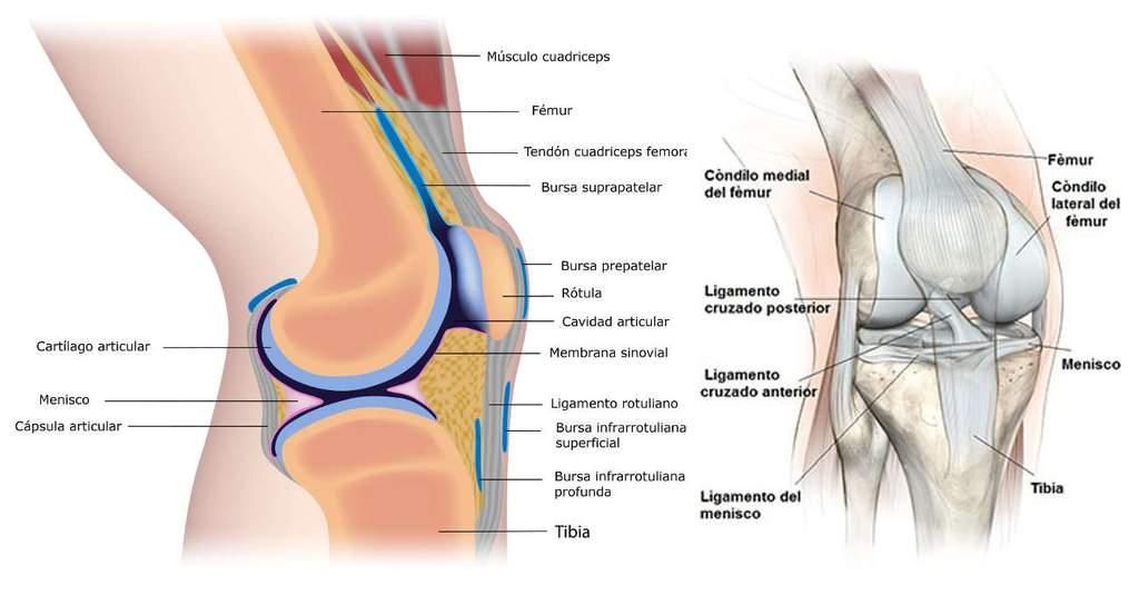 Cómo diagnosticar el esguince de rodilla