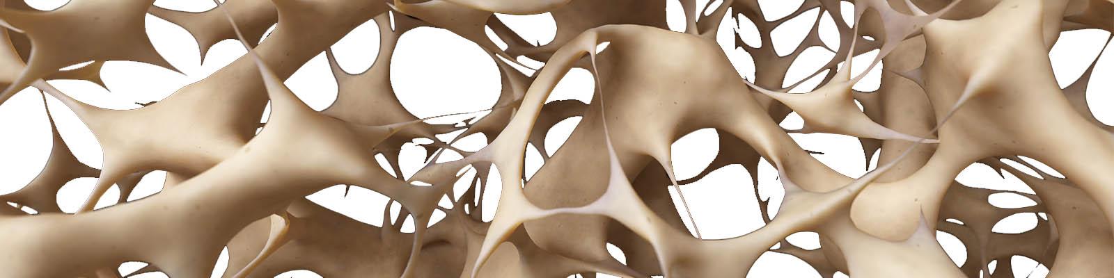 Componentes y estructuras de los Huesos