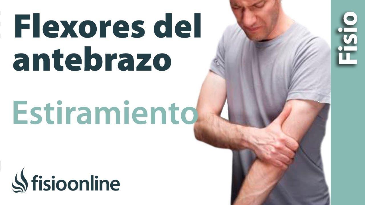 Estiramiento de los músculos flexores del antebrazo | Fisioterapia ...
