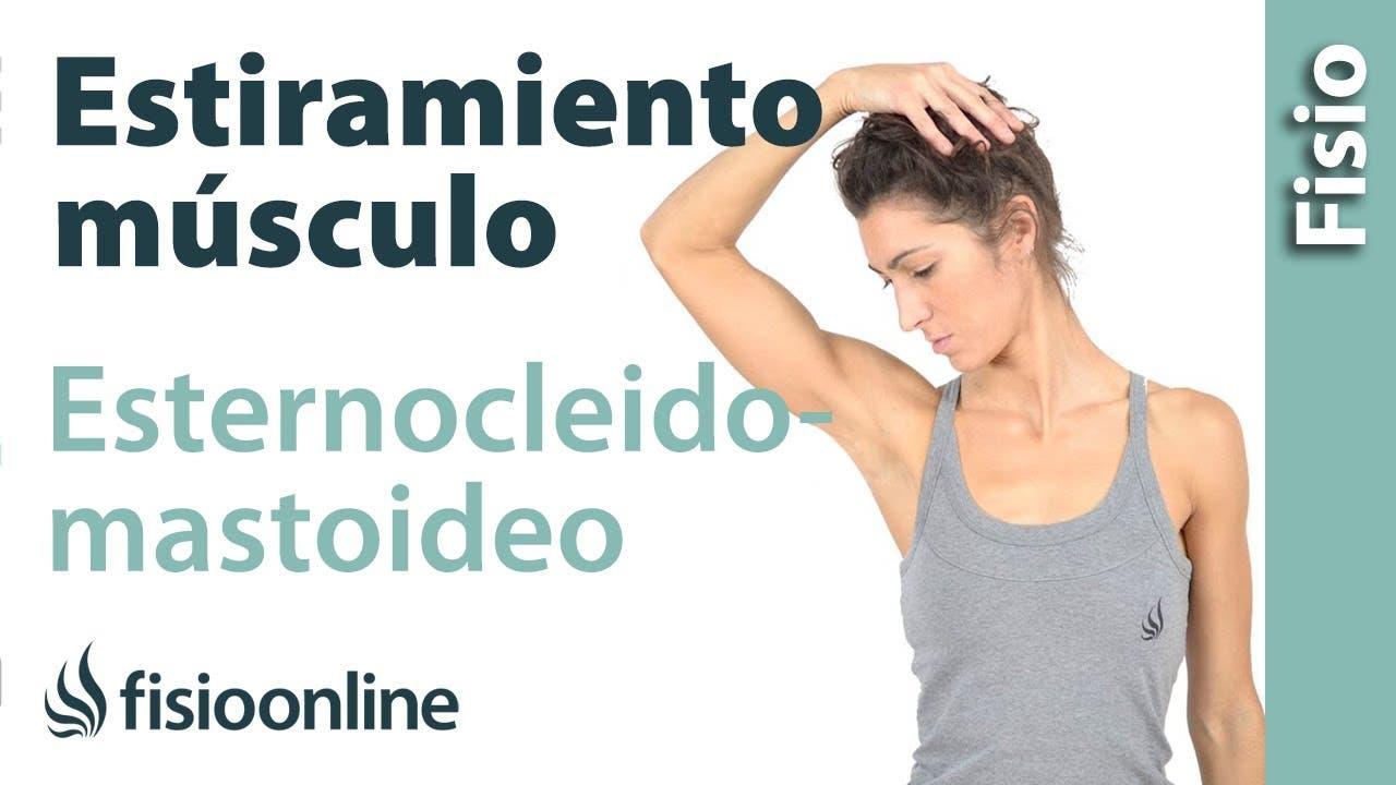 Músculos esternocleidomastoideos. Anatomia, importancia, funciones y ...