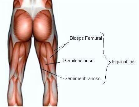Músculos flexores de la rodilla