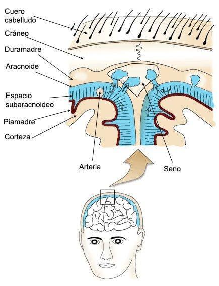 Protección del sistema nervioso