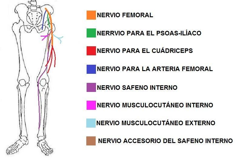 Cómo realizar una automovilización del nervio femoral para cruralgia ...