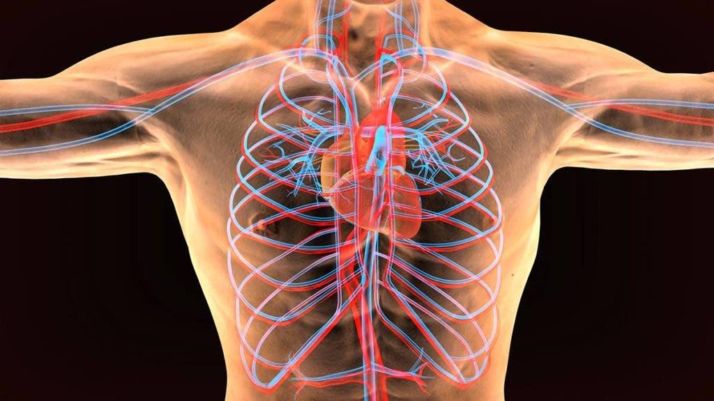 Sistema Cardiorespiratorio y Vascular
