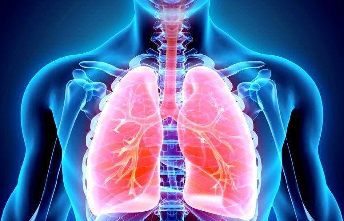 Funcionamiento del Sistema Respiratorio