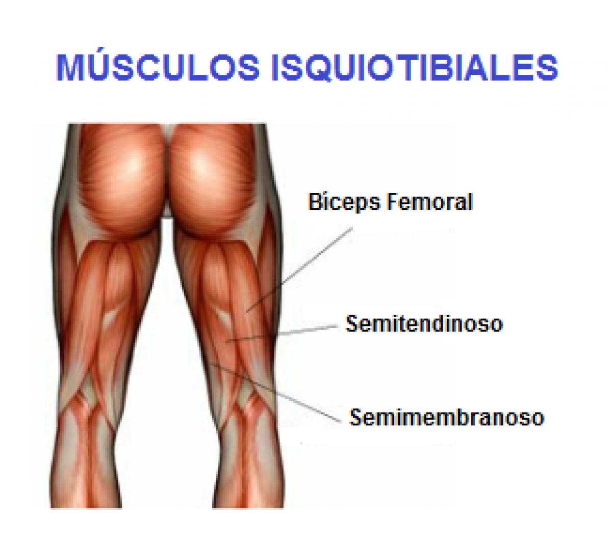 Recuperacion desgarro biceps femoral