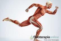 Tratamiento fisioterápico de las miopatías