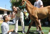 Equinoterapia: Los caballos mejoran tu salud
