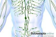 El sistema linfático. Para que sirve y cómo funciona