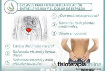 6 claves para entender la relación  entre la vejiga y el dolor de espalda