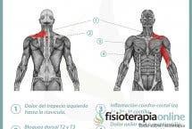 Relación entre el sistema cardio-circulatorio y el dolor de espalda