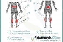 Relación entre vejiga y dolor de piernas y espalda