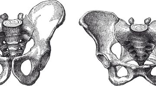 Anatomía de la pelvis femenina y masculina. Suelo pélvico y diferencias entre ambos