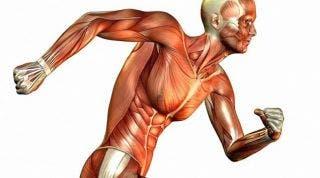 Análisis de la postura corporal a través de las cadenas GDS y su uso en fisioterapia