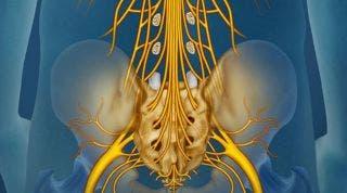 Beneficios de los ejercicios hipopresivos en el síndrome de la cola de caballo