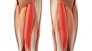 Readaptación ante una rotura de fibras del bíceps femoral de un futbolista (Parte I)