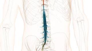 ¿Qué enfermedades pueden ser confundidas con el síndrome de la cola de caballo?