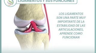 Los ligamentos son una parte muy importante de la estabilidad de las articulaciones. Aprende como funcionan