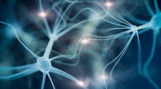 Sistema endocrino: qué es, cual es su función y sus glándulas