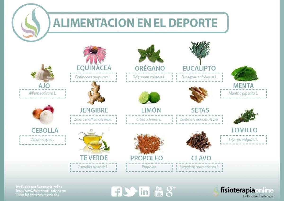 Plantas medicinales y antibi ticos naturales for Tipos de hierbas medicinales