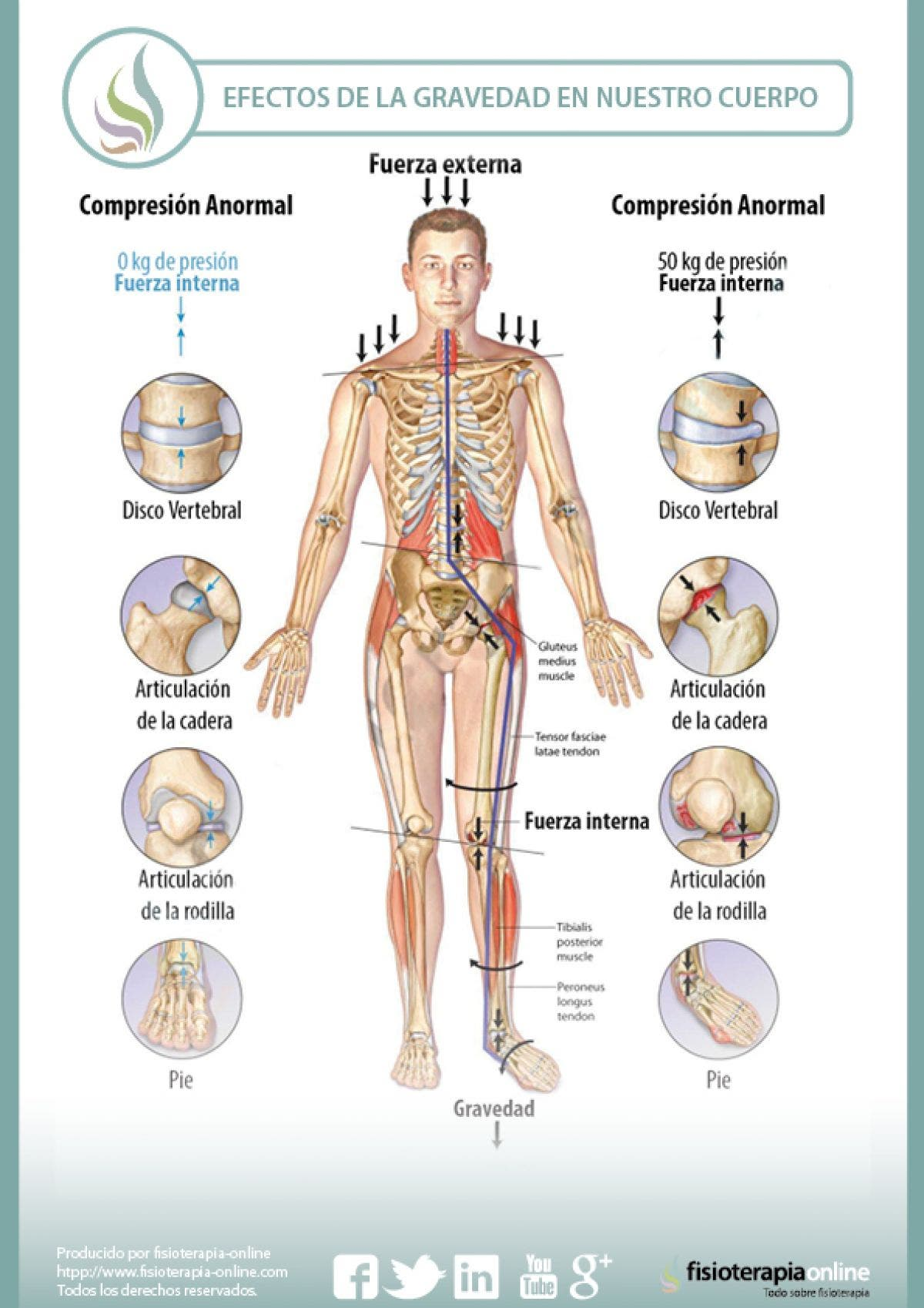 Que es una articulacion en el cuerpo humano