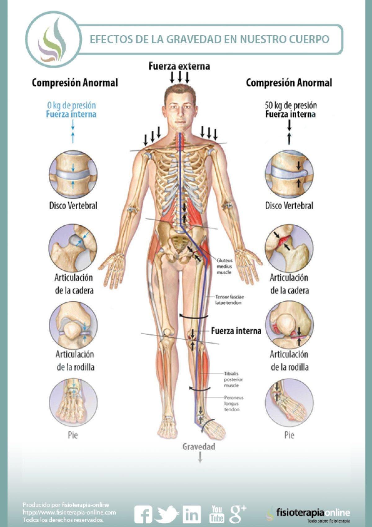 Los efectos de la gravedad sobre nuestro cuerpo y las articulaciones ...