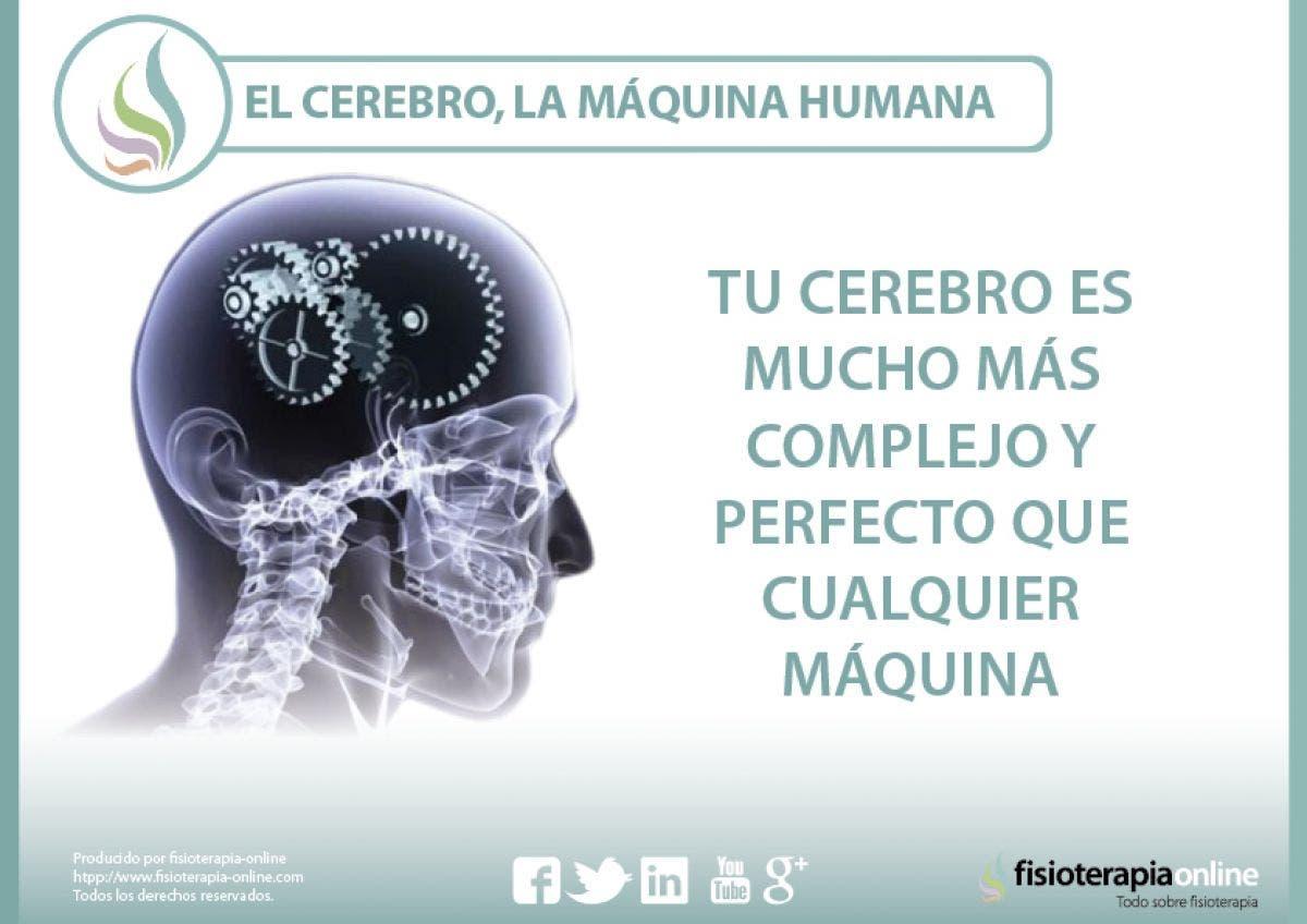 El cerebro, la máquina humana