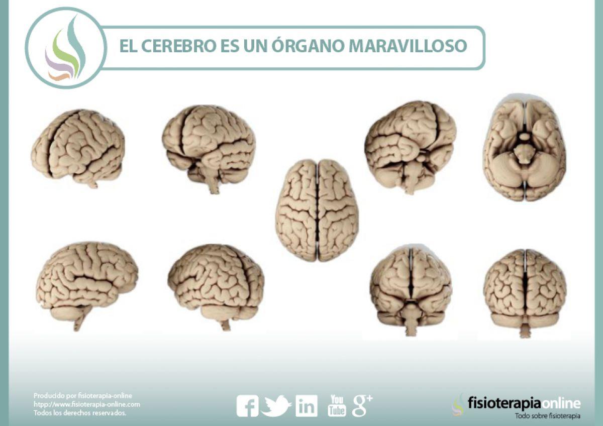 El cerebro, un órgano maravilloso