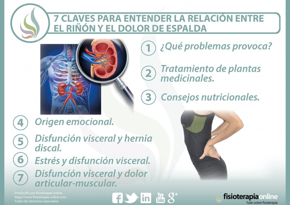 7 claves para entender la relación  entre el riñón y el dolor de espalda