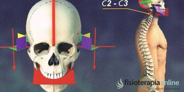 Equilibrio craneal y equilibrio dental