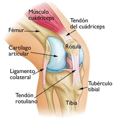 Condromalacia rotuliana qu es y cuales son las causas - Dolor en la parte interior de la rodilla ...