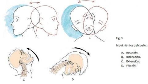 Por qué duele bajo la espátula derecha de la espalda