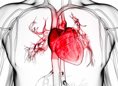 Fisioterapia cardiaca y vascular