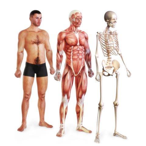 Anatomia, función y biomecánica