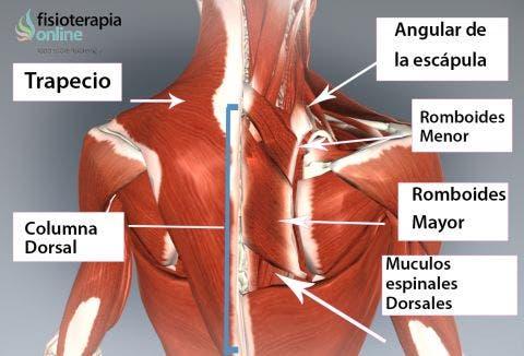 Dolor de de espalda derecho sintomas lado