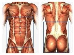 Faja abdominal y lumbar