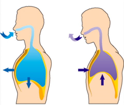 Ejercicios de respiración o respiratorios