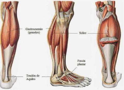 Estiramiento de los músculos gemelo y sóleo - 4 cosas que debes ...