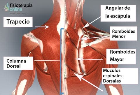 Qué es la dorsalgia? Causas, síntomas y tratamiento del dolor de ...