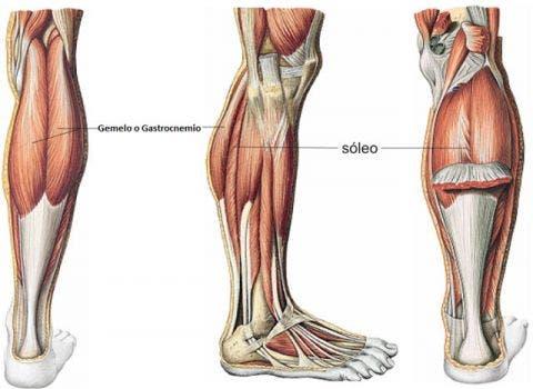 ejercicios para estirar tendones de las piernas