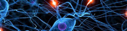Componentes y estructuras nerviosas
