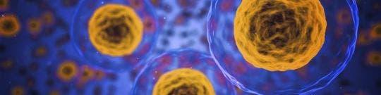Tejidos, células y sustancias
